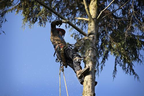 Baum- und Heckenrodung